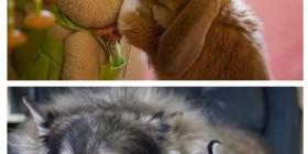 Animales con peluches de ellos mismos