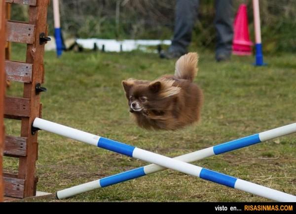 Perrito volador