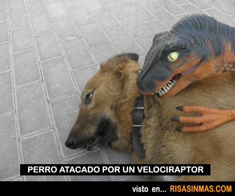 Perro atacado por un velociraptor