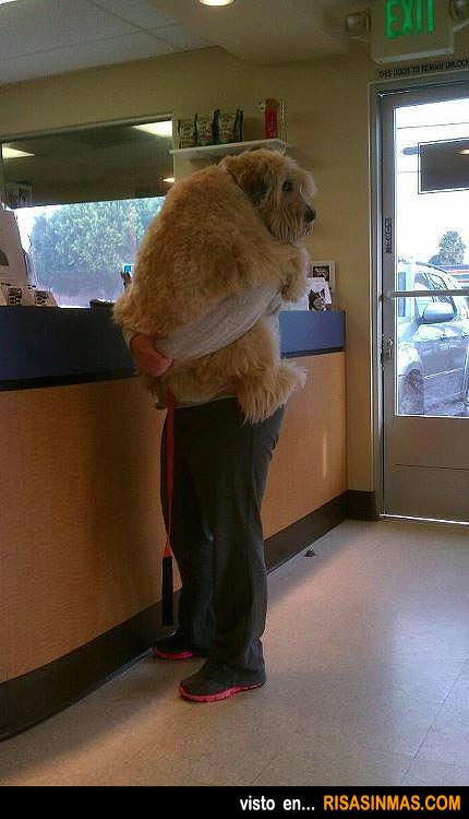 Perro en brazos como un bebé