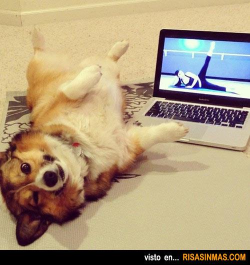 Perro haciendo deporte