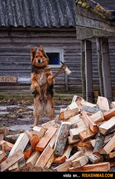 Perro leñador