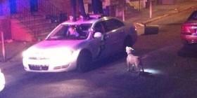 Perro peligroso asusta a la policía