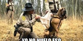 Perro policía que se revela