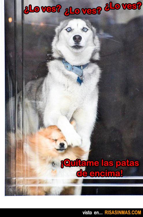 Perros mirando por la ventana