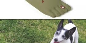 Pie zombie para tu perro