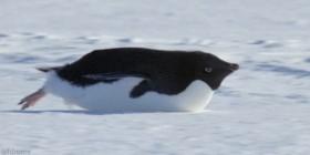 Pingüino misil
