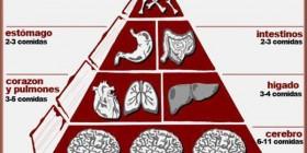Pirámide alimenticia del zombie