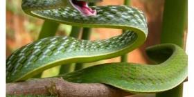 Serpientes divertidas