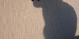 Sombra chinesca de gato