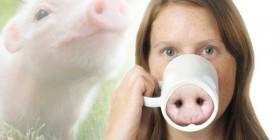 Tazas originales: Cerdo