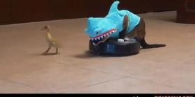 Tiburón persiguiendo a un patito