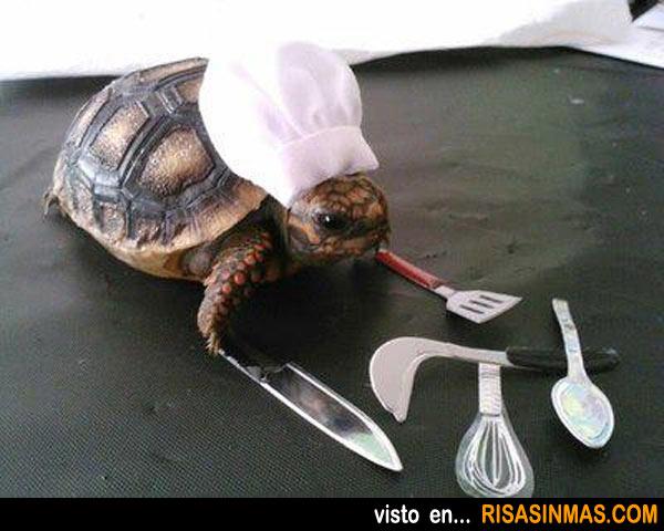 Tortuga cocinera