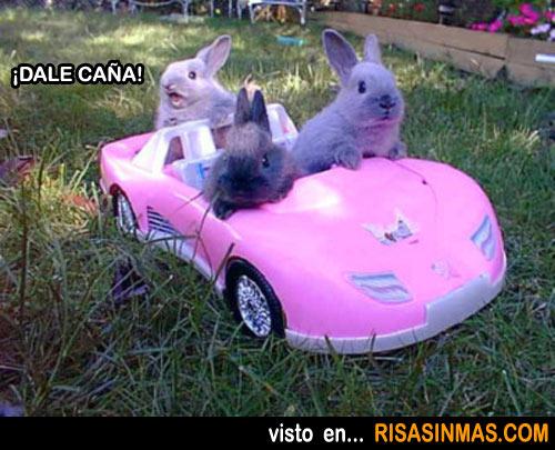 Tres conejos en un deportivo descapotable