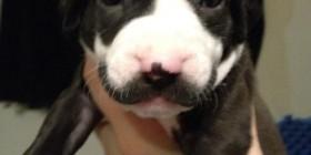 Un perro de bigotes