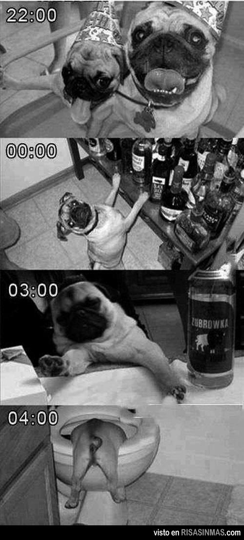Una fiesta de perros
