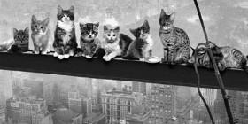 Almuerzo en lo alto de un rascacielos versión Gatos