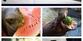 Animales comiendo sandía