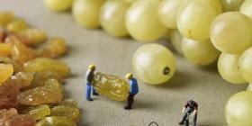Así se inflan las uvas