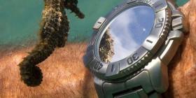 Caballito de mar viendo la hora