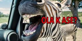 Cebra gritando, Ola K Ase?