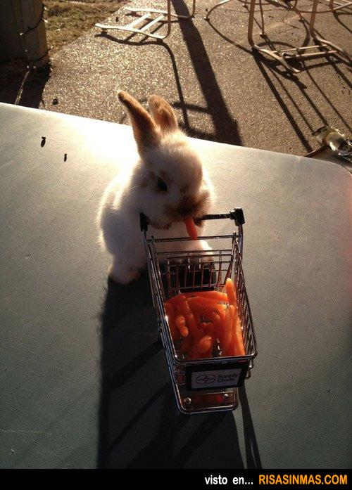 Conejo de compras en el supermercado