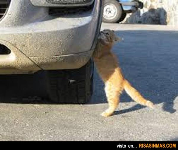 Definición gráfica: Gato mecánico
