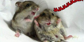 Hamsters riéndose