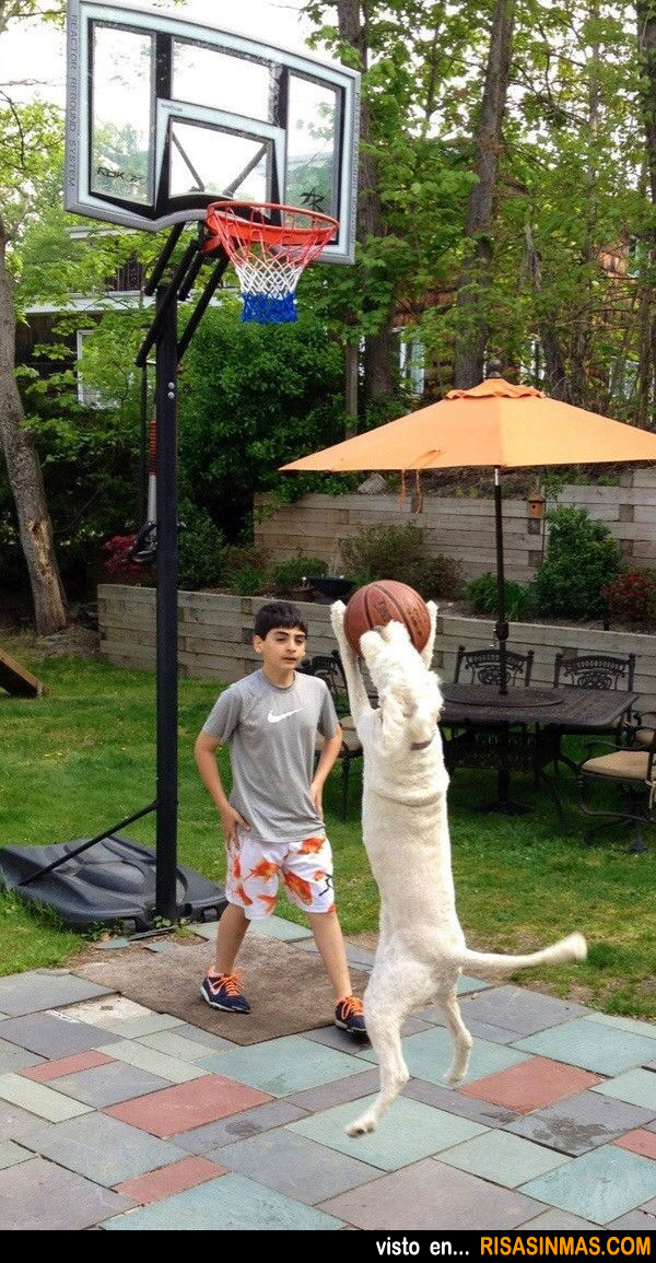 Jugando al baloncesto con tu perro
