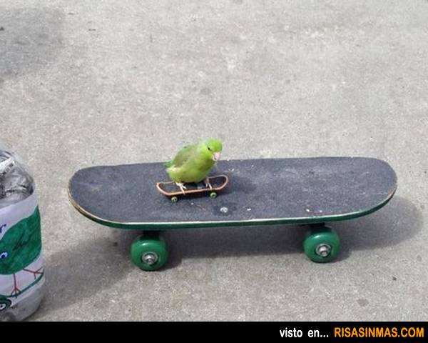 Loro skater