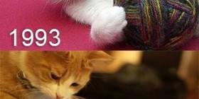 Los juegos de los gatos 1993 y 2013