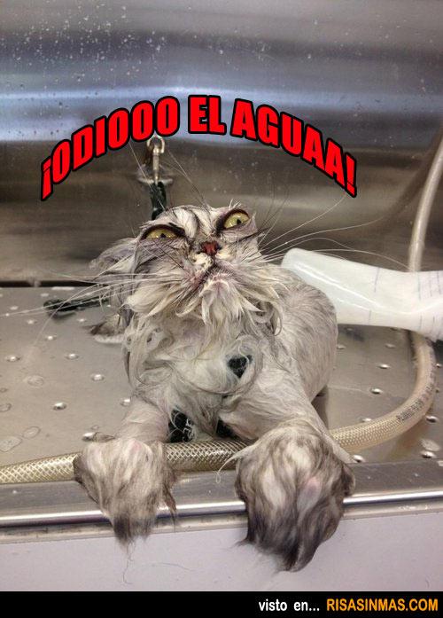 ¡Odio el agua!