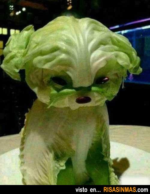 Perro hecho con ensalada