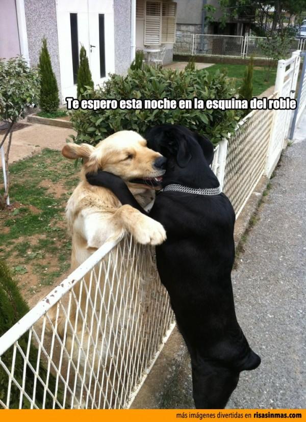 Perros quedando para salir