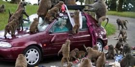 ¡Que monos!