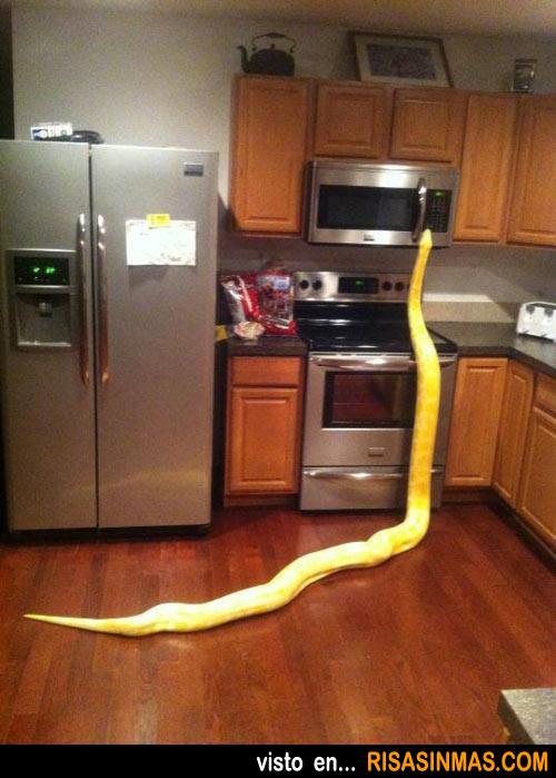 Sorpresa en la cocina