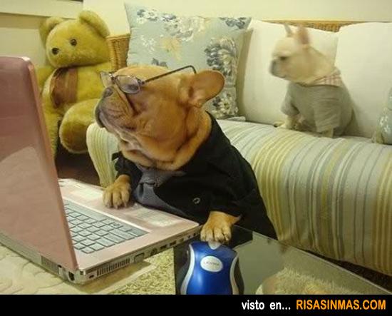 Tu perro buscando en Google