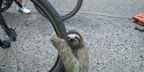 Adoro las ruedas