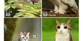 Búhos + Gatos