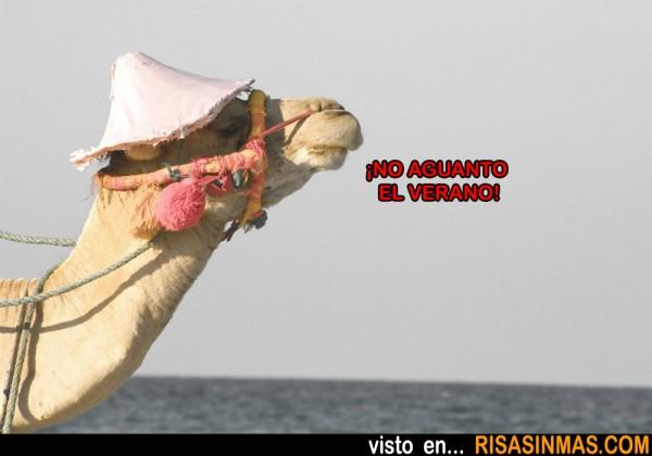 Camello veraniego