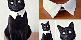 Tu gato elegante siempre