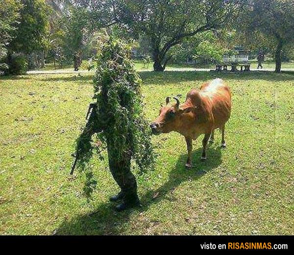 A la vaca  no la engañas