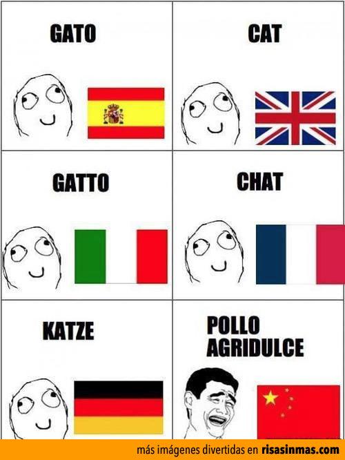 Como se escribe gato en varios idiomas