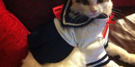 Disfraces gatunos: Marinerito