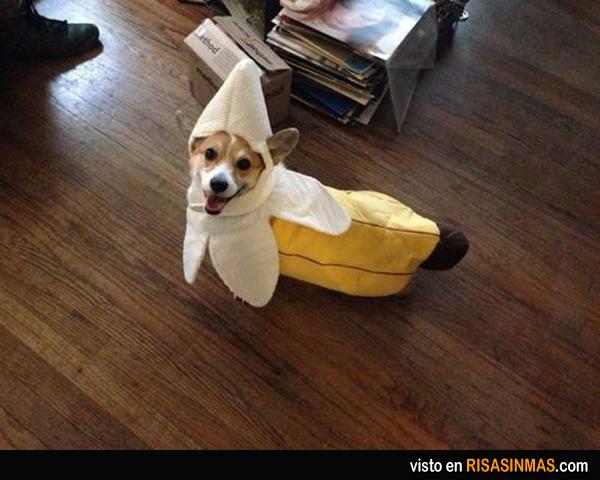 Disfraces perrunos: plátano