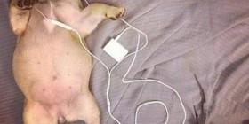Dormirse escuchando música