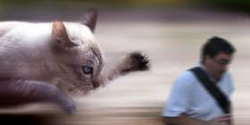 El arruina fotos perseguido por un gato gigante