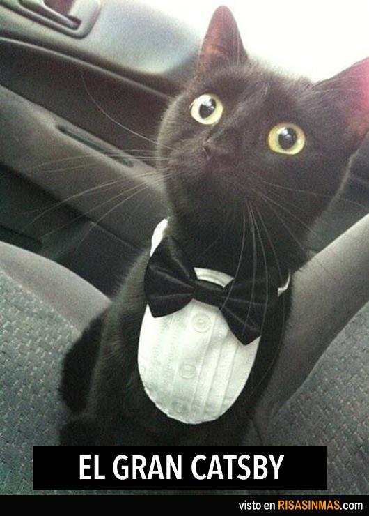 El gran Catsby