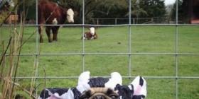 Esas vacas no van a descubrirme...