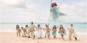 Foto de boda original: ¡Un tiburón!